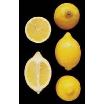 Limonero verna en maceta de 40 cent metros pb c tricos y - Limonero en maceta ...