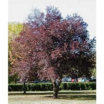 Arboles de hoja perenne para jardin pequeo por lo que son for Arboles frutales de hoja perenne para jardin