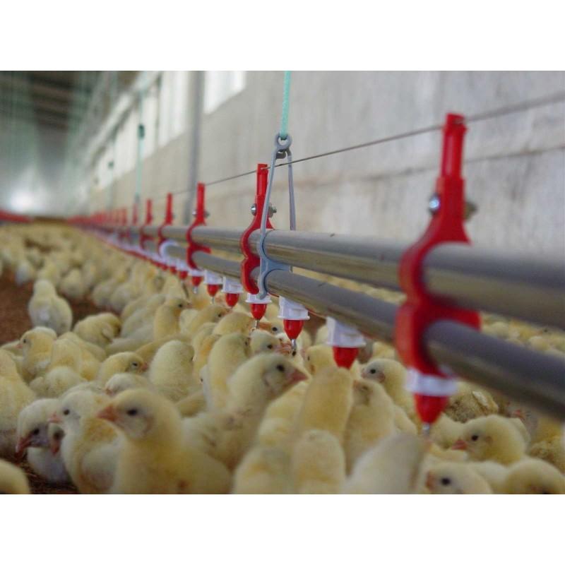 Pipetas para aves Ziggity | Comederos y bebederos para aves ...