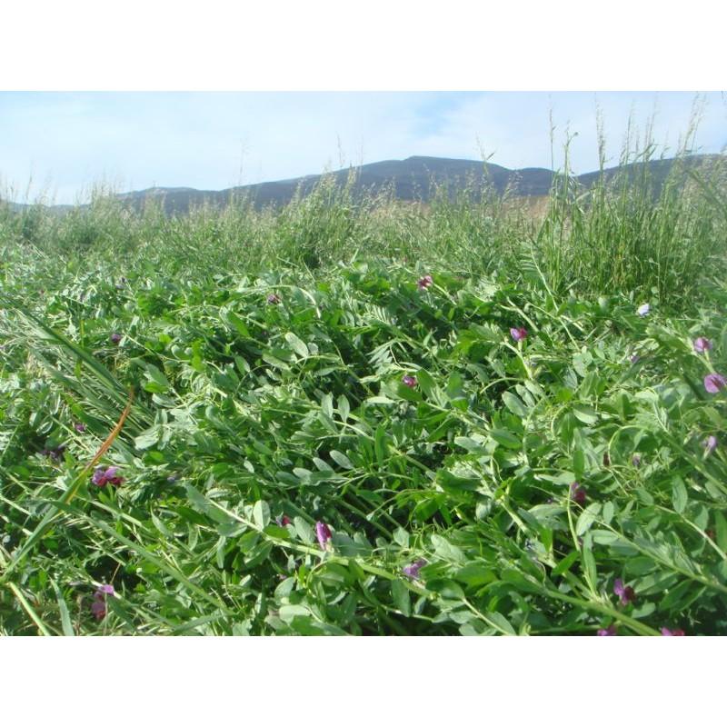 Heno de Veza+Ray-Grass+Avena | Forraje animal | 3018414 | Agroterra