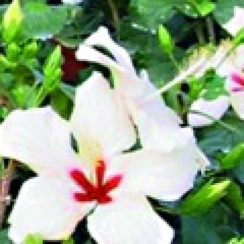 10 nombres de plantas ornamentales imagui for 4 plantas ornamentales
