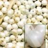 sobre Bulbos Cebolla de Mesa Silvermoon, Blanca 250 Gr