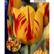 Foto de Tulipan Washington 10 Ud Bulbos