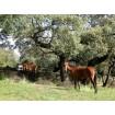 Foto de Parcela Rústica en la Sierra de Aracena con Pequeña Casa de Campo