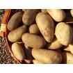 Foto de Patatas Nuevas Ecológicas -Extraídas bajo Pedido