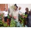 Foto de Curso Plagas y Enfermedades de las Plantas en el Huerto y Jardín. 16 Mayo 2014