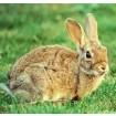 Foto de Seguro  Explotaciones  de  Conejo