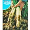 Foto de Cebolla-Cebolleta Calçots. Envase Hermético de 4 Gr/800 Semillas.