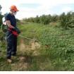 Foto de Pulverizador para Herbicida con Bateria Recargable