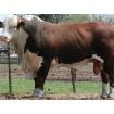 Foto de Livestock/ganado en Pie