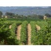 Foto de Derechos de Plantación de Rioja Alavesa