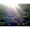Foto de Vendo Alfalfa   Pacas Muy Buenas Heno de Alfalfa, Alfalfa en Rama