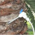 Dispensador de  Inyecciones contra el Picudo Rojo de las Palmeras (Endoterapia)