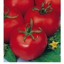 50 Plantas de Tomate de Ensaladas Tres Canto...