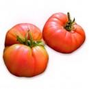50 Plantas de Tomate Gigante de Caña Gordón...