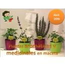 Curso de Cultivo de Plantas Aromaticas en Ma...