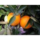 Naranja, Navel-Lane Mesa 10 Kg