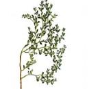 Herniaria Planta Molida 1 Kgr. Propiedades D...