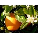Naranja, Navelina Mesa 10 Kg