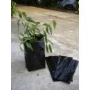 Plantar Olivos y Frutales en Bolsas, Planton...