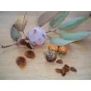 Bote 1 Kg.semillas Kaki,lotus