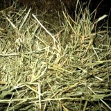 Alfalfa en Rama. Recogida en Origen. 1000 Kg