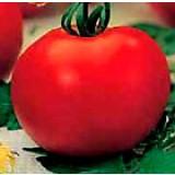 Tomate Alexandre. Rastrero. 0,20 Gr / 60 Semillas - Seeds. Elevada Producción.