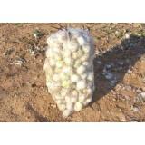 Cebolla para Calçots Saco 25 Kg