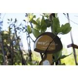 Alcornoque (Quercus Suber) Micorrizado, Productor de Madera y Boletus (Boletus Edulis) (0,3-0,5 M). 10 Unidades