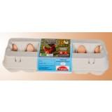 Docena de Huevos Ecológicos Clase