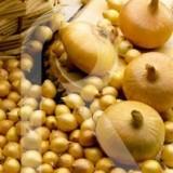 Bulbos Cebollita de Mesa Paja de las Virtudes-Amarilla-350 Gr