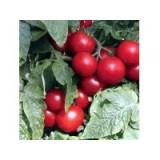 Planta Tomate Cherry Totem m.13