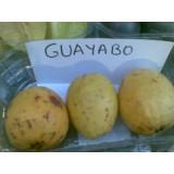 Guayaba en Maceta de 20 Cm