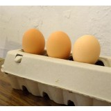 Huevos para Incubar de Gallina Pita Pinta Rosa. 12 Unidades