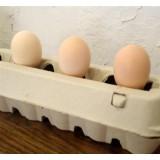 Huevos para Incubar de Gallina Pita Pinta Abedul. 12 Unidades