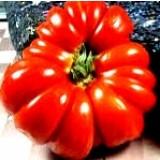 Tomate Costoluto Fiorentino. 1 Gr.