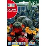 Semillas Cactus y Plantas Crasas