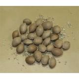 Semillas de Ginkgo Biloba 5 Semillas