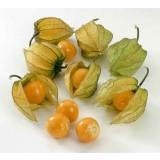 Plantas de Phisalis (Uvilla)