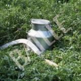 Alfalfa Capitana Cert-25Kg