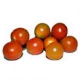 Planta Tomate Cherry en Bandeja de 6 Unidades