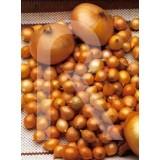 sobre Bulbos Cebolla de Mesa Stuttgarten Riesen-Amarilla 400 Gr