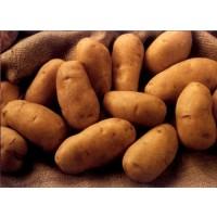 Patatas Ecologicas  Nuevas Certificadas  de LUGO