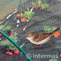 Malla de Protección contra Pájaros 2X10 M