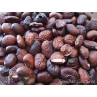 Semillas Acanto Acanthus Mollis