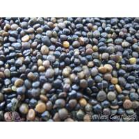 Semillas Escobon Prieto Adenocarpus Telonensi