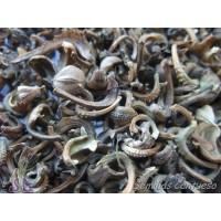 Semillas Caléndula Calendula Officinalis