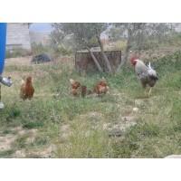 Huevos Ecologicos 100%