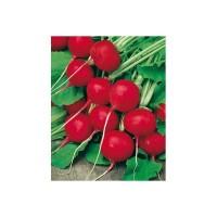 Rabanito Redondo Rojo Ecológico 10g