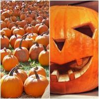 Semillas de Calabaza de Halloween. JACK O'Lan